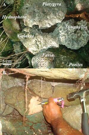 tipos de coral en tumbas de Leluh
