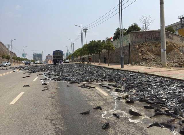 derrame de bagres en carretera de China