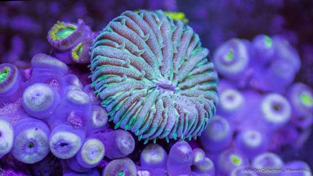 fauna marina por Sandro Bocci
