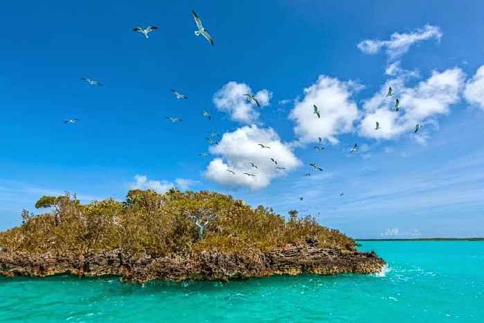 gaviotas en la laguna de Chalk Sound, Islas Providenciales