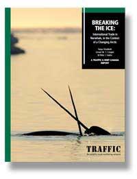 informe sobre el narval de TRAFFIC