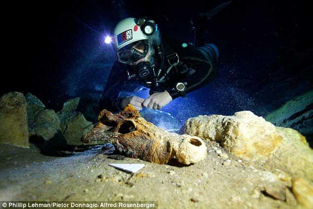 cráneo de lémur gigante descubierto en Madagascar
