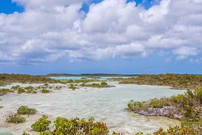 manglares en Chalk Sound