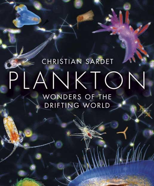 el maravilloso mundo del plancton