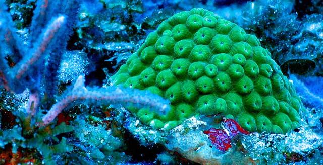 montículo de coral en el Caribe