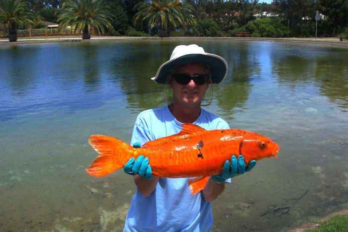 pez de colores invasor