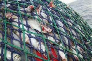 red con capturas por pesca de arrastre