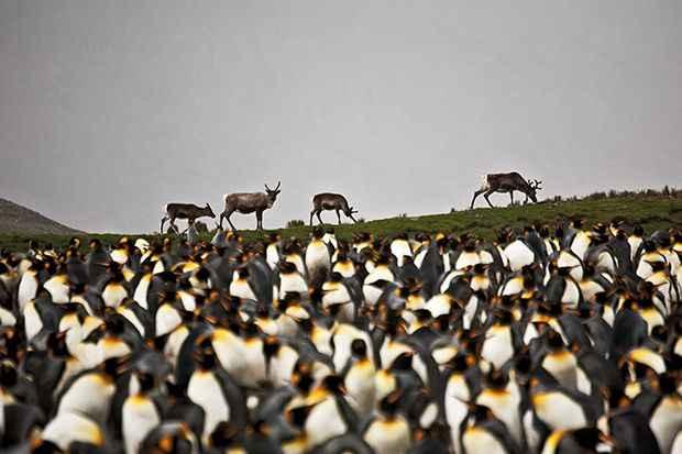 renos y pingüinos