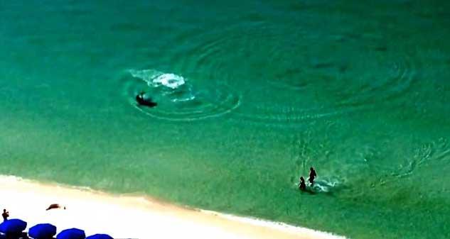 tiburón martillo cerca de bañistas en playa de Florida