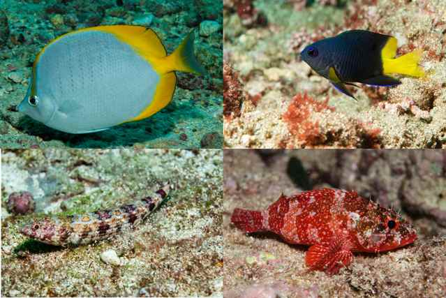 vida marina en la isla de la Ascensión