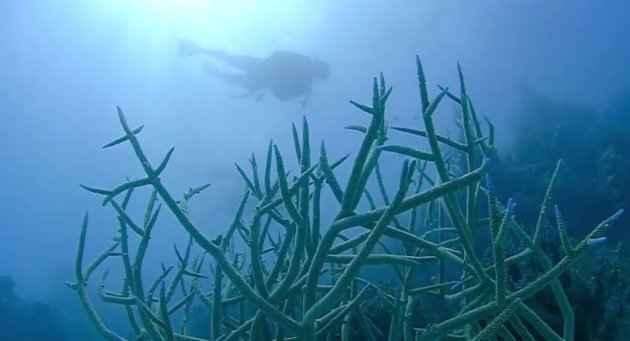 buzo y corales en el agujero azul de la Gran Barrera