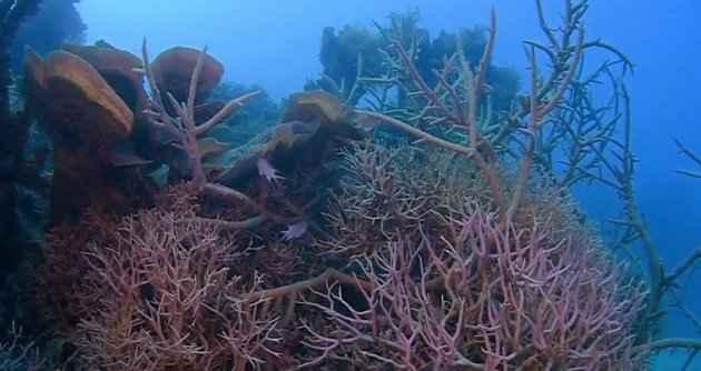 corales en el agujero azul de la Gran Barrera