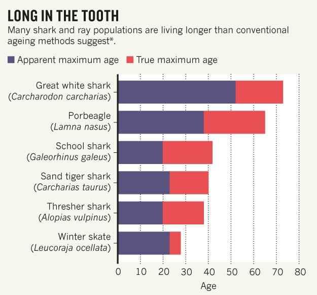edades reales de los tiburones