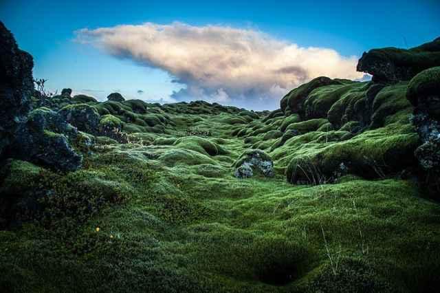 musgo campo lava Eldraun 6