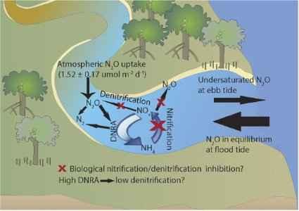 procesos de N2O en un manglar
