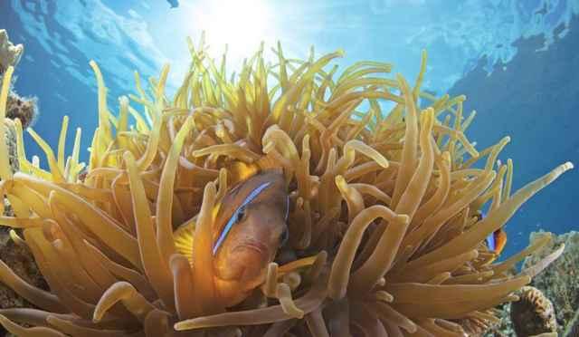 arrecife de coral en Eliat