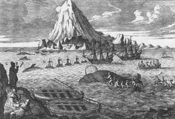 caza industrial de ballenas en el siglo XIX