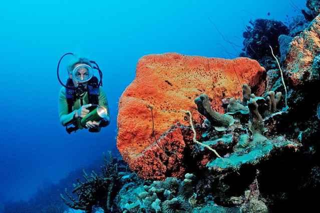 proteger a los corales del sol