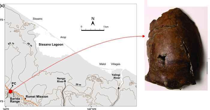 lugar del hallazgo del cráneo del tsunami de Aitape