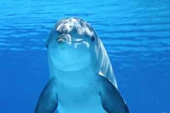 delfín y cultura