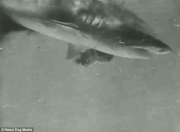 primer vídeo submarino graba un tiburón