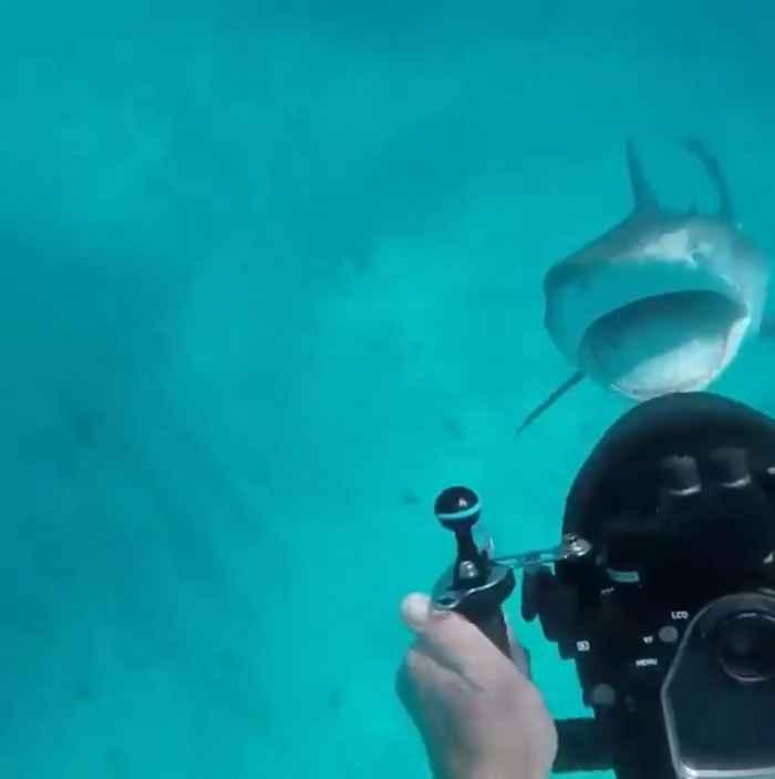 tiburón amenaza a un buzo