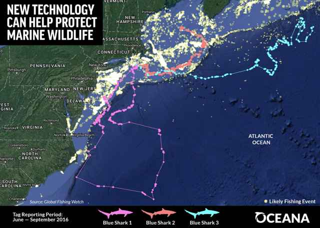 Oceana Global Fishing Watch