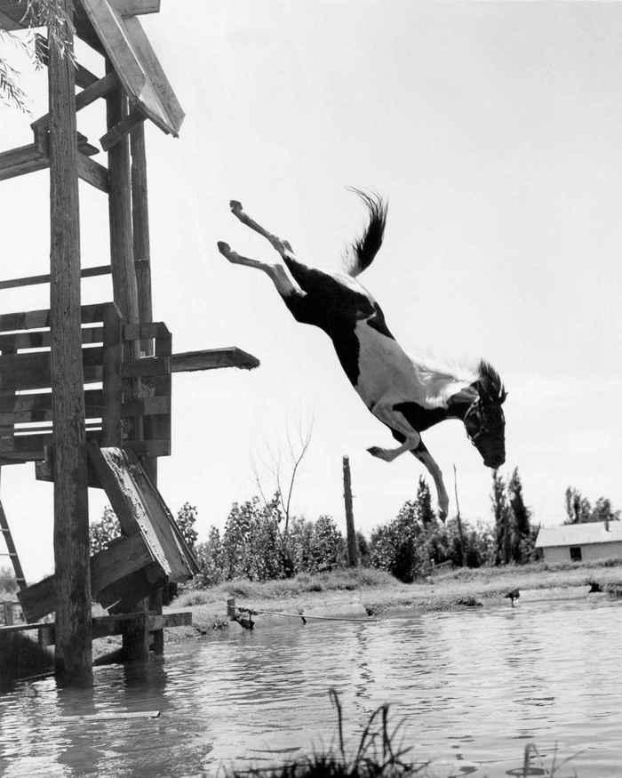 caballo saltando al agua