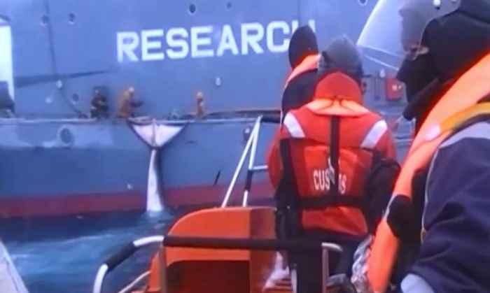 caza de ballenas por Japón