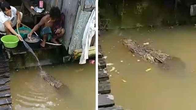 dan de comer a un cocodrilo en Borneo