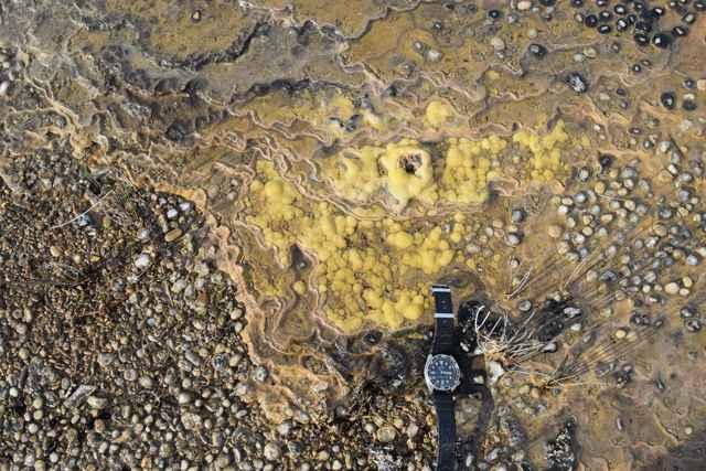 estromatolitos en Tasmania