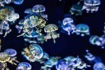 medusas éxito