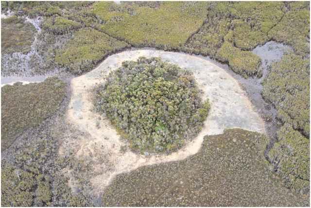 montículo en el río Giblin, Tasmania