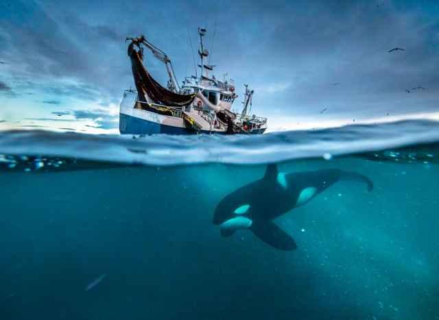 orca bajo un barco