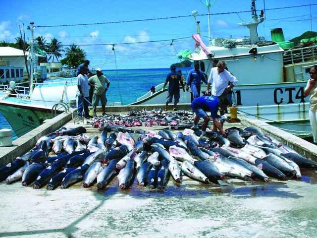 pesca masiva de tiburones