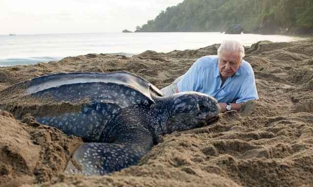 tortuga laúd y  David Attenborough