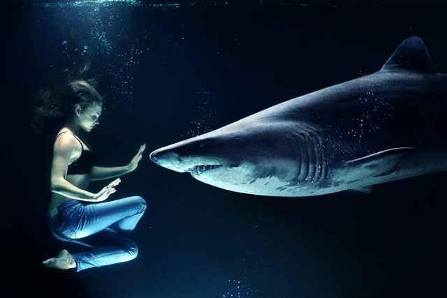 ancestro humano-tiburón