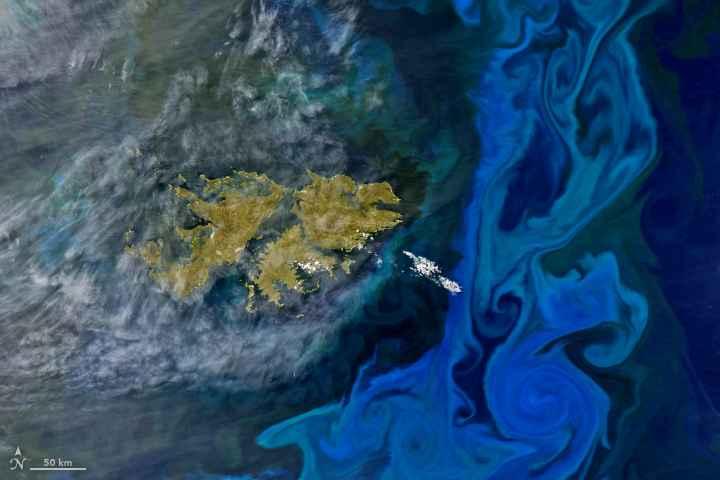 bloom de fitoplancton cerca de las islas Malvinas