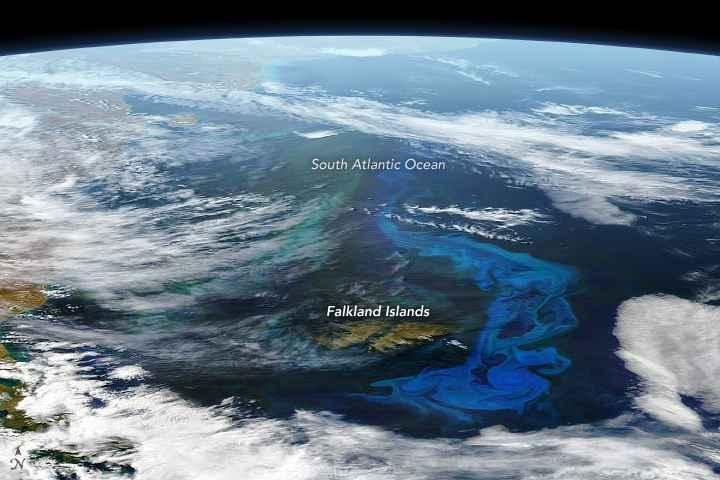 bloom de fitoplancton en el Atlántico sur