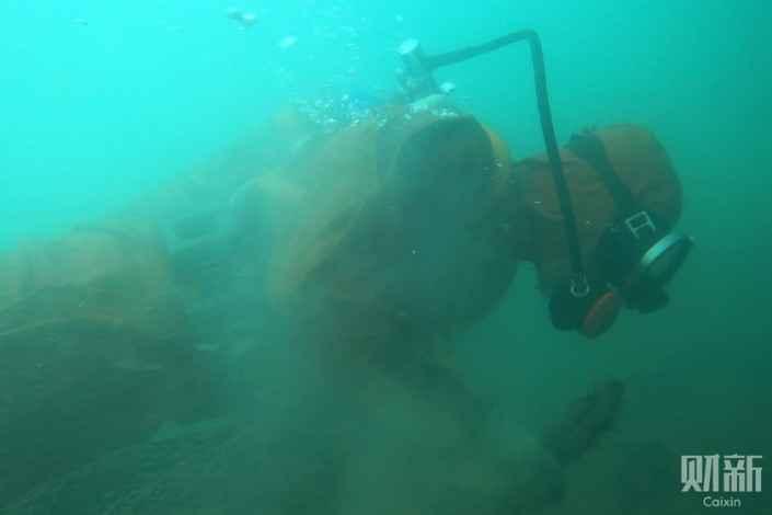 buceador sumergido de pepinos de mar de China
