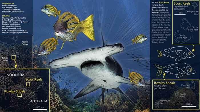 cambio en la forma de los peces