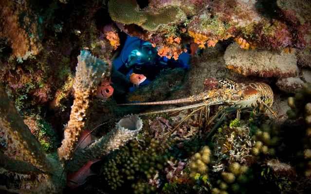 esponjas del Caribe