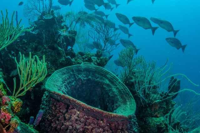 esponjas y corales en el Caribe