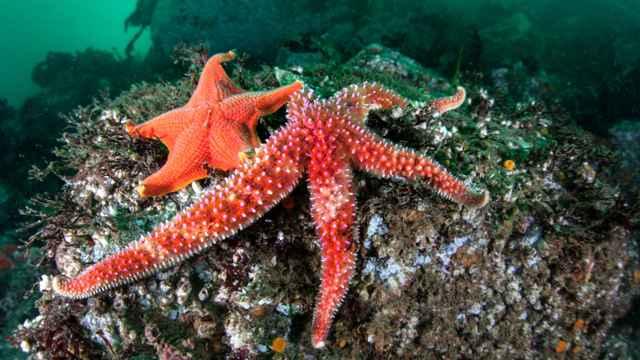 estrellas de mar en California