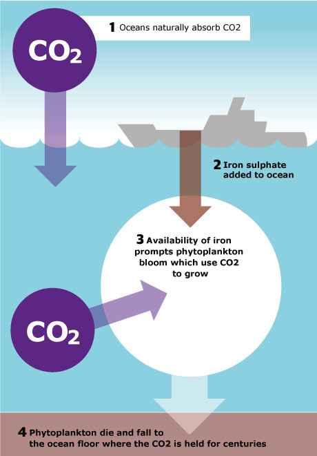fertilización del océano con hierro