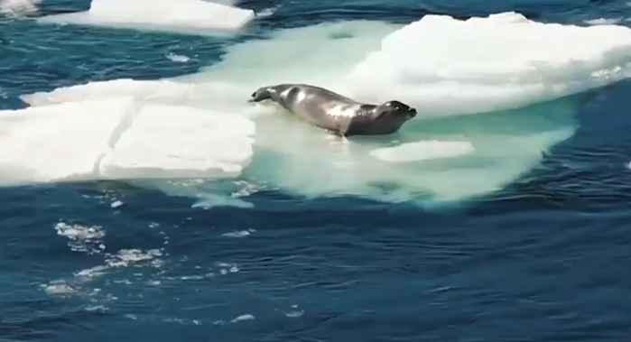 foca en un témpano de hielo