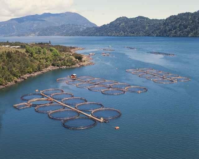 granja de salmón en Chile