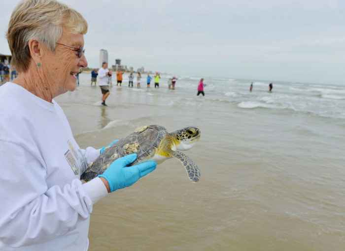 liberación de una tortuga verde