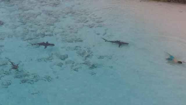 niño acechado por tiburones