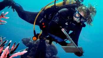 observación de corales en la Gran Barrera